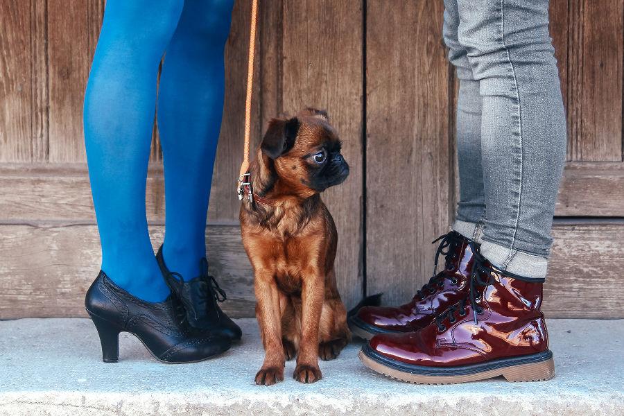 pets during divorce